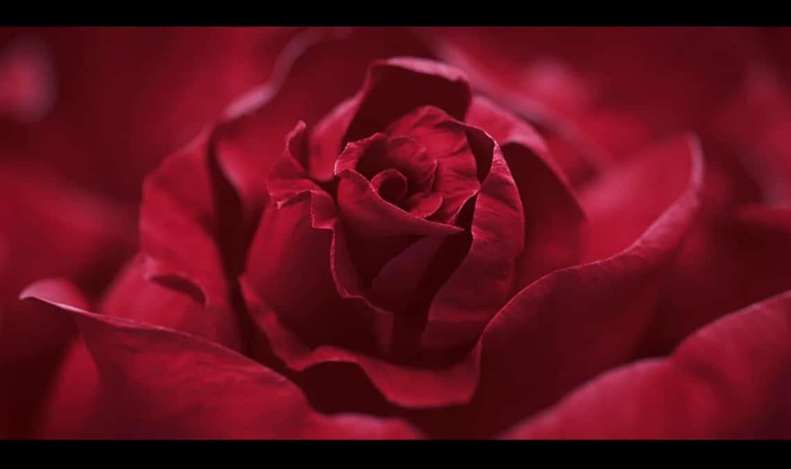 Promotivni video Blossom Bloom